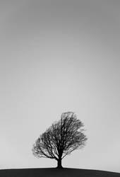 _-|-_ Hügel Baum Himmel