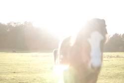 viel Sonne und ein Pferd!