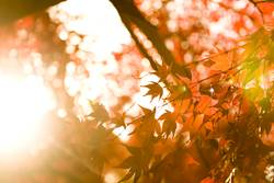 englische Herbst Sonne