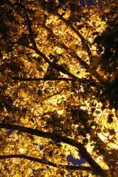 Baum-Leuchte