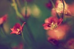**flowers**