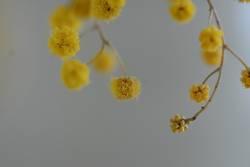 Gelbe Tupfen 2