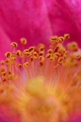 Kitsch-Mädchen-Pink-Bild 2