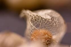 Netz im Herbst