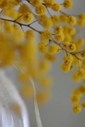 Gelbe Tupfen 3