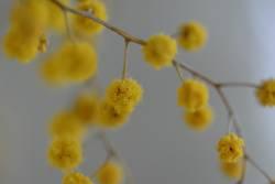 Gelbe Tupfen 1