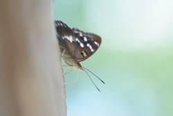 Schmetterling mit Freilicht