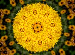 Kaleidoscope pattern of yellow flower