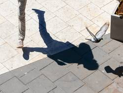 shadow of person walking in square scaring a pigeon
