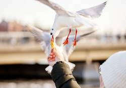woman feeding the seagulls