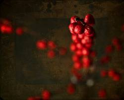 still life of red berries on dark background