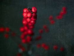 red berries on canvas background