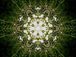 kaleidoscope image of white flower