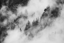 Berge, Wald und Nebel III