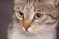konzentrierte Katze/Kater !