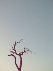 Tree in a desert ..