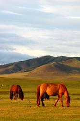 Landscape of horses on the grasslands