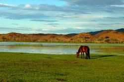 Landscape of a single horse on the grasslands