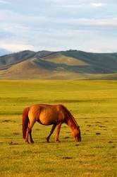 Landscape of horse on the grasslands