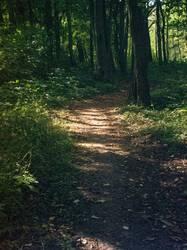 Waldweg - Licht und Schatten