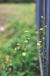 Blumenkragarm