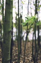 Verholzung