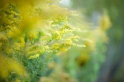 Gelbe Gewächse