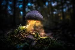 Lumos funghi