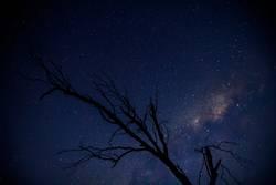 Sternengeäst