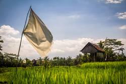 Da wo der Sack Reis umfällt