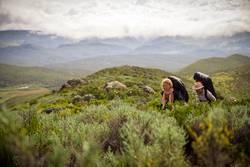 Besteigung Mt. Kenya