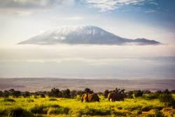 Elefanten für Kilimandscharo
