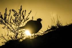 Das Huhn das goldene Eier legt