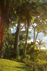 Dschungelparadies