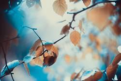 Herbstlaub im Licht