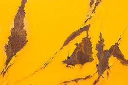 Gelber Rost