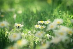 Blick durch die Blume