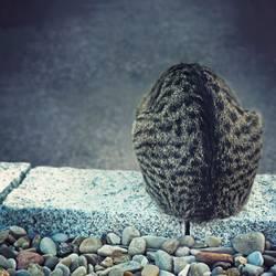 Katzenfellmütze