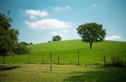 Weide, Bäume, Felder, blauer Himmel & Wolken