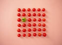 Tomaten Ordnung rot & grün