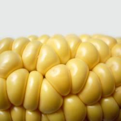 Der Mais oder Das Mais?