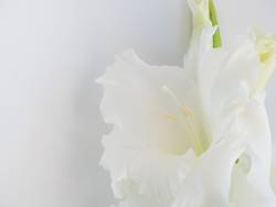 Foreground of white flower on white background