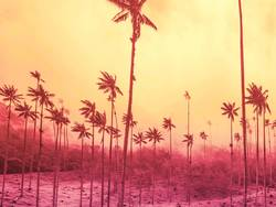 Palm trees background with copy space on yellow and strong pink