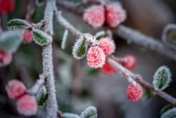 Ein wenig Frost