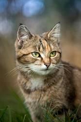 Ein kleines Kätzchen