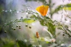 Es regnet heute