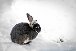 Süß | putziges Kaninchen