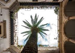Innenhof Palme