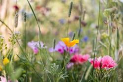 Blumenmischung II