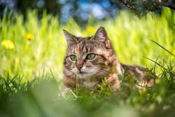 herausragend | Katzenkopf im hohem Gras